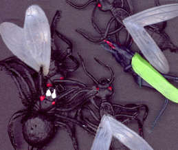 #TY475 - Bag of 10 Extra Huge Rubbery Monster Bugs