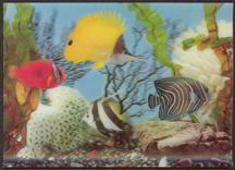 #MS127 - Lenticular Photo Postcard of Tropical Fish