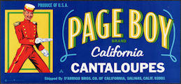 ZLSH603 - Group of 50 Page Boy California Cantaloupes Crate Labels - Pictures a Bellhop
