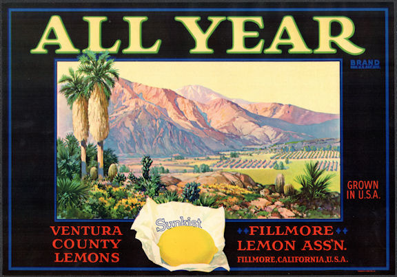 #ZLSH022 - Group of 12 All Year Sunkist Lemon Crate Labels - Fillmore, CA