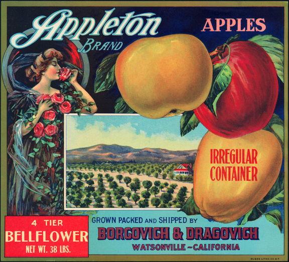 #ZLC242 - Appleton Bellflower Apple Crate Label