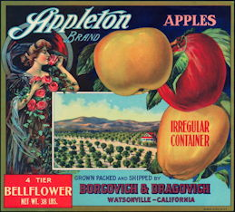 #ZLC242 - Appleton Bellflower Apple Crate Label