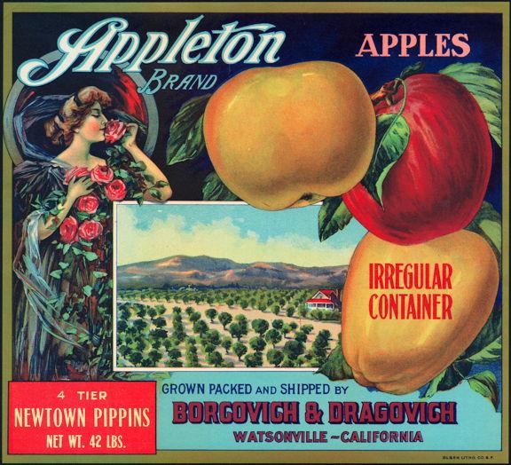 #ZLC094 - Appleton Newtown Pippins Apple Crate Label
