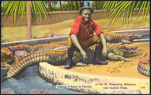 #NE030 - Daring Black Guy Sitting on an Alligator Postcard - St. Augustine - As low as $1.75