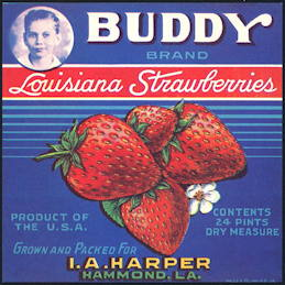 #ZLC404 - Buddy Louisiana Strawberries Crate Label