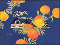 #ZLC272 - Very Large Kaap's Marigold Candy Box Label