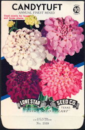 #CE004 - Mixed Candytuft Lone Star 10¢ Seed Pack - As Low As 50¢ each