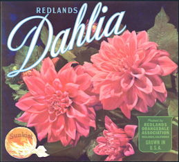 #ZLC013 - 1950s Sunkist Dahlia Oranges Label