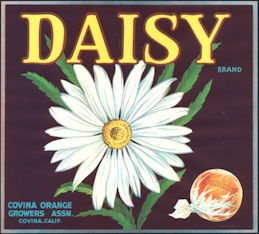 #ZLC328 - Daisy Brand Sunkist Orange Crate Label