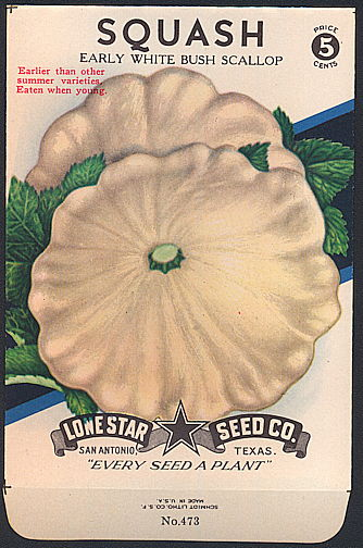 #CE077 - Brilliantly Colored Early White Bush Scallop Squash Lone Star 5¢ Seed Pack - As Low As 50¢ each