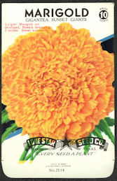 #CE014 - Gigantea Sunset Giant Marigold Lone Star 10¢ Seed Pack