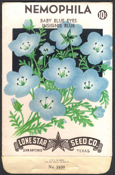 #CE021 - Baby Blue Eyes Insignis Blue Nemophila Lone Star 10¢ Seed Pack - As Low As 25¢ each