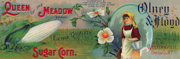 #ZLCA914 - Very Large and Beatiful Olney & Floyd Queen of the Meadow Sugar Corn Crate Label - New York