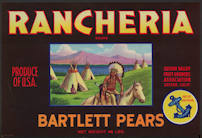 #ZLC347 - Rancheria Bartlett Pears Crate Label - Indian Scene
