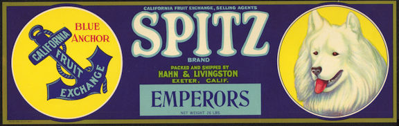 #ZLSG064 - Spitz Brand Grape Crate Label