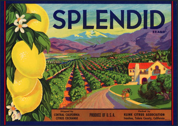 #ZLC301 - Splendid Lemon Crate Label