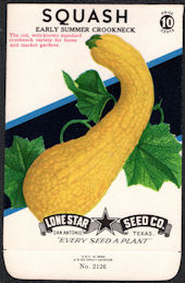 #CE075 - Early Summer Crookneck Squash Lone Star 10¢ Seed Pack - As Low As 50¢ each