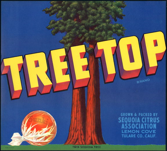 #ZLC442 - Tree Top Sunkist Orange Crate Label - Twin Sequoia Tree