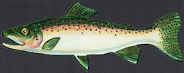 #SIGN222 - Cardboard Diecut Diner Sign of a Trout - Artist signed