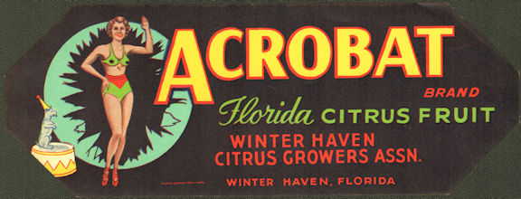 #ZLCA*071 - Acrobat Florida Citrus Crate Label - Winter Haven, Florida