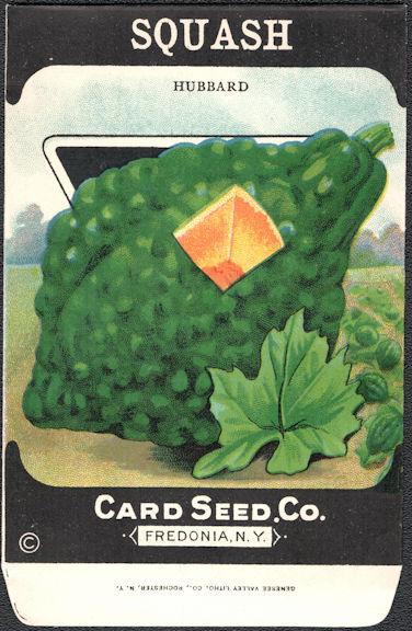 #CE160 - Scarce Hubbard Squash Card Seed Packet
