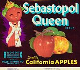 #ZLC072 - Sebastopol Queen Apple Crate Label