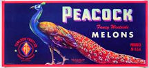 #ZLC232 - Spectacular Large Peacock Melon Label