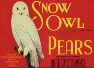 #ZLC167 - Snow Owl Pears Crate Label