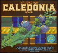 #ZLC150 - Caledonia Valencia Orange Label
